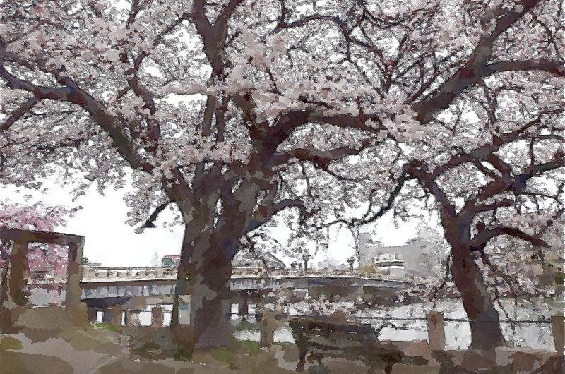 【絵画調変換No074】源助公園のサクラ/水彩画