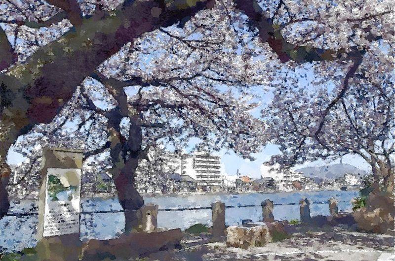20150402頭上いっぱいに咲く源助公園のサクラ/水彩画