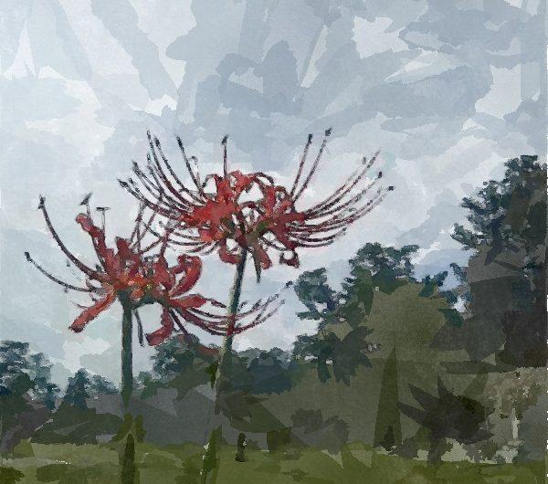 20170923松江城ヒガンバナ/水彩画